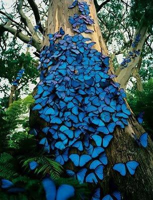 enxame de borboletas (1)